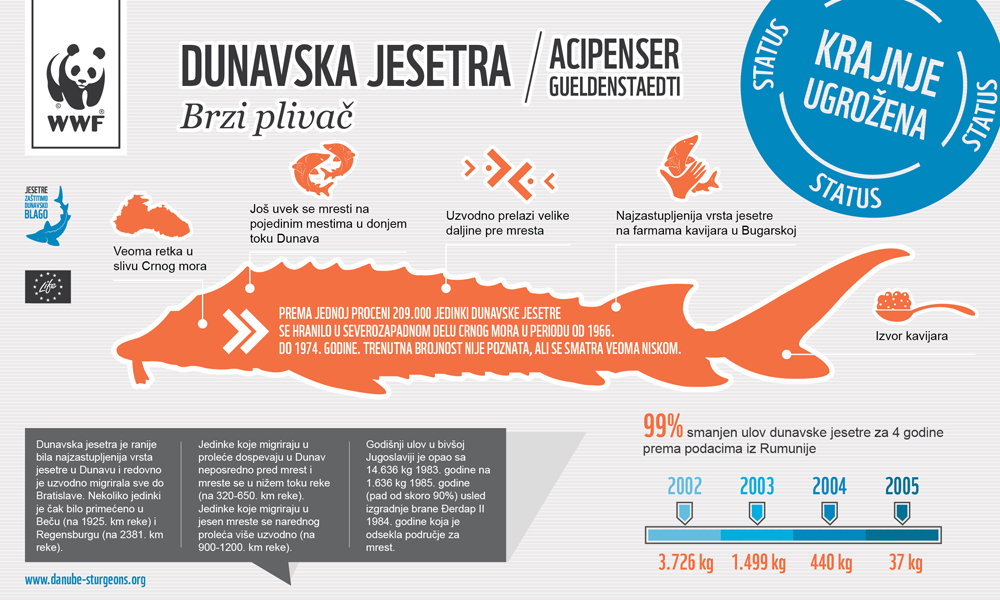 Russian Sturgeon Infographic danube sturgeons.org RS - Ruska (dunavska) jesetra