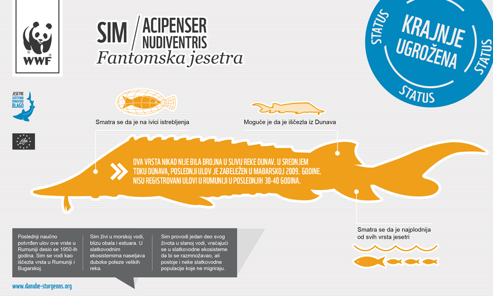 Ship Sturgeon Infographic danube sturgeons.org RS - Sim