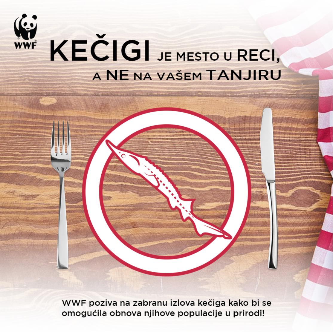 WWF traži zabranu izlova kečige na pet godina