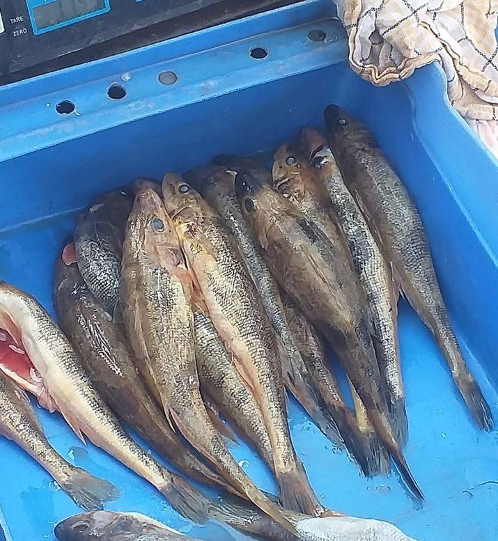 Zaštićene vrste riba i dalje u slobodnoj prodaji